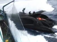 6日シーシェパードの妨害船が日本調査船に衝突する瞬間の映像