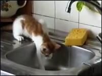 ちょっと間抜けなネコネコ動画。ジャンプしてゴミ箱へインしちゃう子猫www