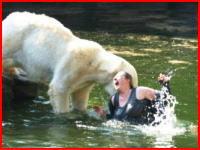 動物園で女性客が白クマに噛み付かれ重傷を負う瞬間の衝撃映像