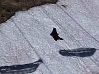 熊さん可愛いじゃねーかww野生のクマさんが雪の斜面を滑って遊んでたww
