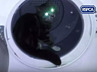 酷いビデオ。ネコを乾燥機に閉じ込めて回転させる様子をうpした鬼畜野郎。