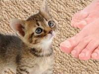 飼い主の足の臭さに驚き飛び上がる子猫の16秒動画wwwどんだけ臭いwww