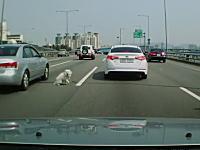 高速道路を走行中の車からワンコがピョン!と飛び出してしまうドラレコ動画。