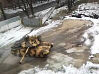 軍事動画。カーリングみたいにコンクリートの上を滑ってくる戦車。Т-64Е