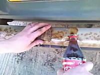 コカコーラって飲むだけじゃなかったのか。知って得する以外な使い方ビデオ。