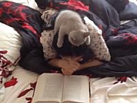 お姉さんが読んでる本が気になって仕方がないにゃんこの位置が可愛いwww