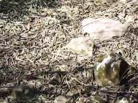 ここに足を踏み入れたらどうなるんだ(((゚Д゚)))恐ろしい数のヘビが一か所に。