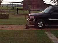子猫がフクロウに連れ去られてしまう瞬間。それを追いかけてったのは母猫?
