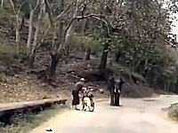 サイクリングしていた女性が象に襲われそうになる。ムドゥマライ国立公園。