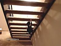 猫の運動神経。自宅の階段であえて難しい上り方をするニャンコのビデオ。