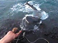 この釣りおっかねえw(゚o゚)wあまりにもデカい獲物を狙う男たちの格闘ビデオ。