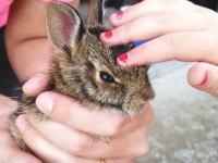 我が家のガレージに一週間閉じ込められていたウサギを放してあげた結果(´・_・`)