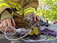 火災現場で逃げ遅れて煙にまかれた子猫ちゃんを発見して救い出した消防士さん