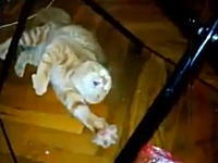 これは酷い(´・_・`)恐怖のあまりおかしな事になっている猫を楽しむ飼い主。