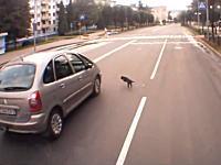 下手くそな当たり屋(ネコ)の犯行現場を記録したドライブレコーダーの映像。