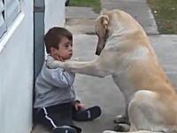 ダウン症の子供に近づき友達になろうと誘う大ワンコのほのぼのビデオが話題に。