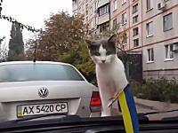 このニャンコの驚きっぷり。二回目でワロタ。車のワイパーにビビる猫。