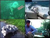 動物園のトラを驚かそうとする男性と人間を驚かそうとするトラの攻防。1g小ネタ。