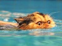水を怖がらない珍しいタイプの猫たちの映像集。猫だって泳げるんだよ!