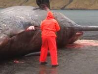クジラ爆発の瞬間がハンパねえ・・・。巨体だけあって内臓の飛び散り方がパねえ。