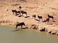 ワニに水中に引きずり込まれてデスロールor野犬の群れに生きたまま食われる