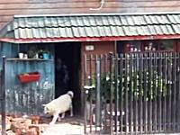 ほんわか動画。老夫婦の荷物運びを手伝うワンコがすっげえ可愛いビデオ。