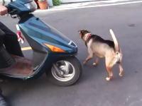 このワンちゃんのバイクのへの乗り込み方が可愛くてワロタwwwお上手www