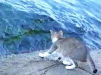 波打ち際で狙いを定めてバチャッ!魚を捕るのが得意なニャンコの狩り映像