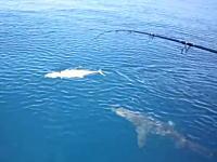海底から魚雷のように迫ってくるサメ!に釣り上げ間近のサワラを奪われた。