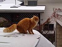 雪が降ると猫も滑る。雪でジャンプを失敗するニャンコの動画が人気になる。