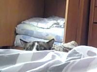 忍びの者かよwwベッドの向こうからそろ~りと様子を窺うニャンコが可愛い