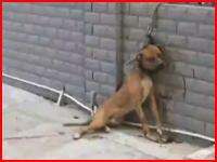 老人が飼い犬に噛み殺されてしまう一部始終を監視カメラが捉えていた。中国