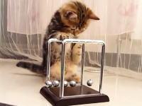 カチカチ振り子と子猫。力学的エネルギー保存の法則に興味津々なコネコ。