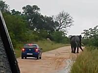 なんで近づいた。野生の象を甘く見たドライバーが車で近づいてひっくり返される