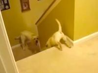 ほのぼの。我が子の初めての階段下りを優しく見守るママ犬。猫はひどい。