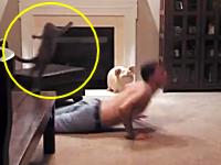 ハイテンションでご主人様に飛びつこうとしてぶっ飛ばされた猫ちゃん19秒動画