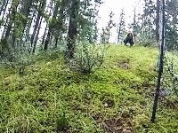 林道サイクリング中にハイイログマに近接遭遇してしまった人のヘルメットカメラ。