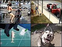 ペットのワンコを捨てて行く無責任すぎる飼い主を撮影した監視カメラ1g小ネタ