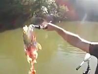 ピラニアの多い川で魚釣りをするとこうなる動画。釣ったそばから骨だけにww