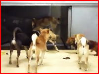 捨てられた犬たちの最期。ガス室でガス殺から焼却まで。一部ショッキングあり。