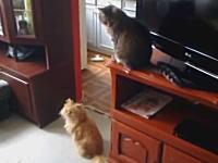 自宅に戻ったら部屋の中が大変な事になっていた。犯人はだれや動画。猫2犬1。