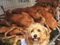 これはなかなかエグい。中国の「犬」食べまくり週間の写真が日本人にはきっつい。