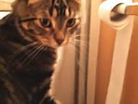 なんだこのネコwwwトイレットペーパーを巻き替えるのがお得意なネコがカワイイw