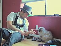 ネコに楽しんでもらいたかった男。お得意の手品を見せてニャンコの反応を。