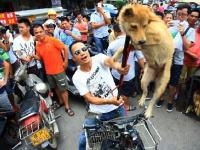 この犬を助けたいのなら金で買い取れ!と中国人が拷問している動画が世界で話題