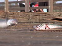 魚「うわああああああああ」なにこれちょっとだけ笑った17秒動画。なぜ作ったwww