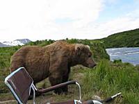 これは諦めるレベル。キャンプしていたら巨大なヒグマが2~3メートルの距離に(@_@;)