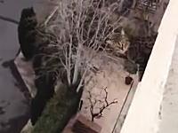 ネコの大失敗。屋上の水抜き穴から出ようとしていたネコが誤って落下してしまう。