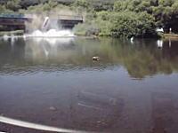 衝撃の瞬間。川に泳ぎにきていたら車が橋を突き破って落ちてきた(@_@;)
