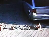もしあなたが酔っ払って眠たくなったとしても駐車場でだけは寝てはいけないwww